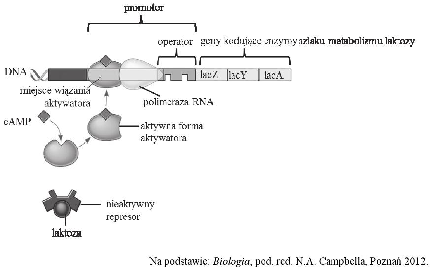 Genetyka Biologhelp