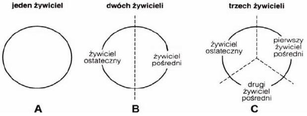 Cykle życiowe pasożytów - schemat