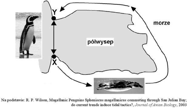 Migracje pingwinów - mapa