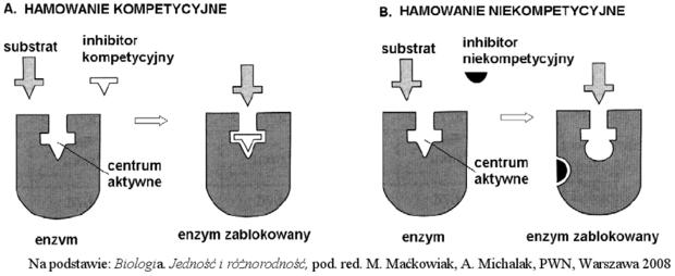 Inhibicja enzymów