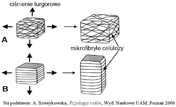 Ułożenie włókien celulozowych