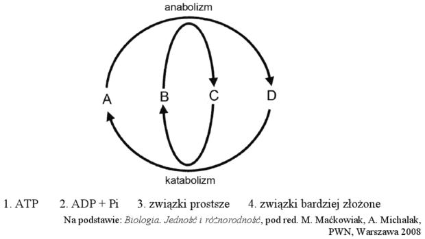 Metabolizm - schemat