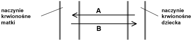Schemat transportu łożyskowego