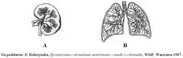 Płuco nerka
