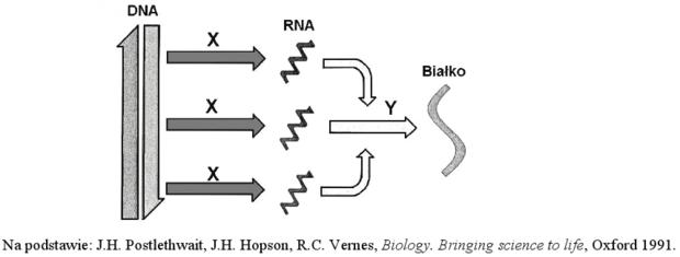 Ekspresja informacji genetycznej