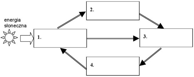 Schemat krążenia materii