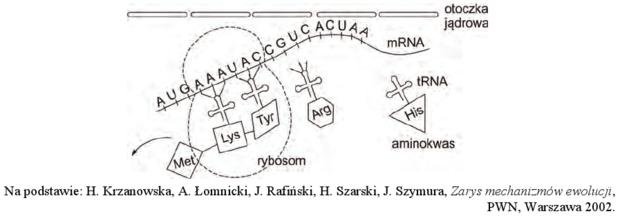 Translacja schemat