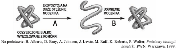 Denaturacja białka