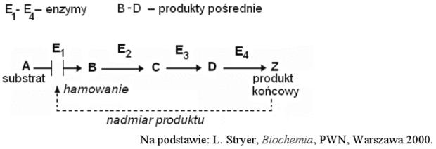 Regulacja szlaku enzymatycznego