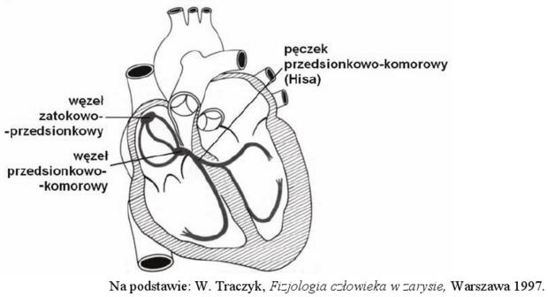 Układ bodźcoprzewodzący serca