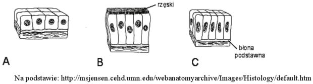Typy nabłonków