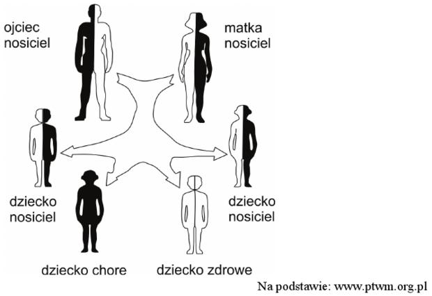 Schemat dziedziczenia