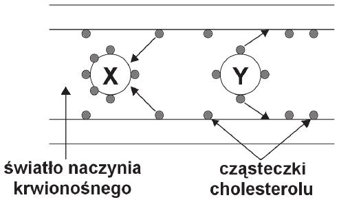 Funkcje lipoprotein
