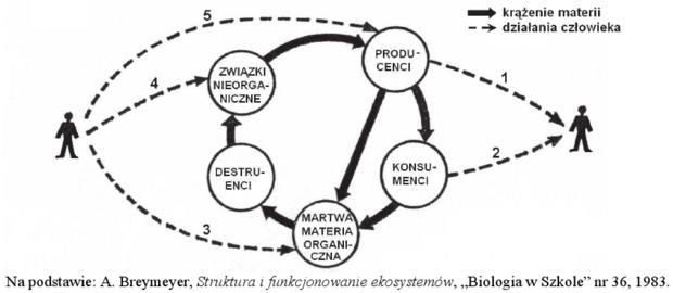 Krążenie materii w ekosystemie