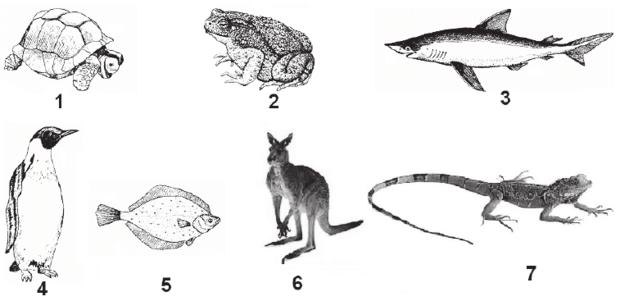 Przykłady kręgowców