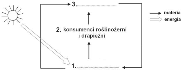 Ekosystem schemat