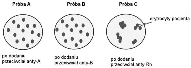 Oznaczanie grupy krwi