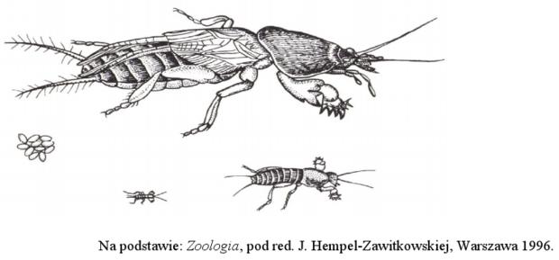 Zwierzęta Biologhelp