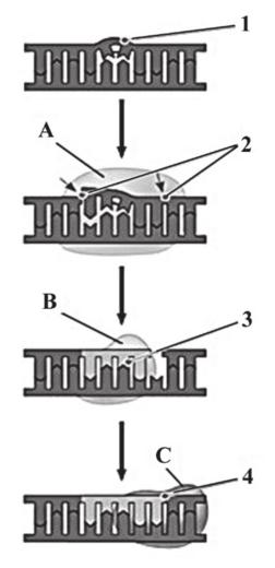 naprawa uszkodzonego DNA